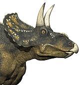 diceratops dinosaur closeup