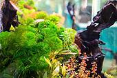 Tropical Acquarium