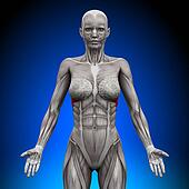 Serratus Anterior - Female Anatomy
