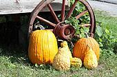 Pumpkins, Squash, Wagon Wheel