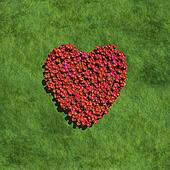 red heart create by flowers with grass