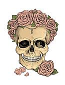 Colorfull illustration. Skull and roses