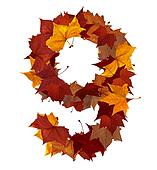 Number nine multicolored fall leaf composition isolated