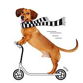 dachshund dog riding the cartoon scooter