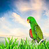 Green macaw with nature