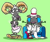 knitting sheep