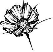 sketch of a wild flower