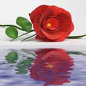 Rose Love Represents Romance Flower And Bloom