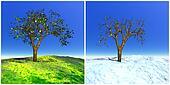 Summer and winter tree