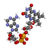 Flavin adenine dinucleotide (FAD) redox coenzyme molecule.