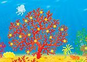 Coral, jellyfish, crawfish, shell