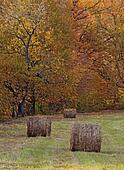 Bales of Hay in the Autumn Landscape, oil paint stylization