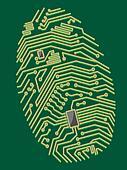 Color motherboard fingerprint