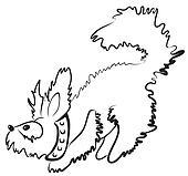 smal fluffy dog