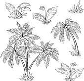 Palm trees, flowers and grass, contours