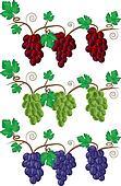 Grape and Vine illustration