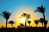 silhouette of palm trees against sun