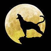 black panther in front of moon