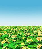 Yellow primroses