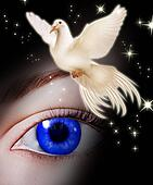 White dove bringing hope
