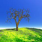 Dead tree in summer