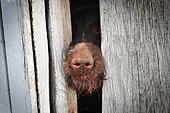 заблокированная собака картинка