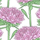seamless background with pink flowers aster on a white