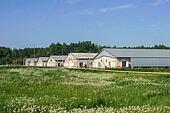 farm in field