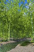 Bamboo forest oasis