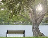 Beautiful Park Bench on water with Sun Rising through tree
