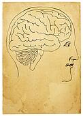 Old Style Head and Brain Illustration
