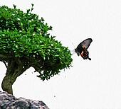 Photo of  butterfly silhouette sitting on a bonsai tree, both isolated in white background  stylized and filtered to look like an oil painting