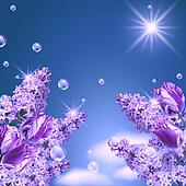 Lilac, tulip and magnolia