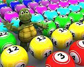 tortoise with bingo