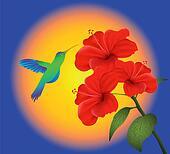 hibiscus and humming bird