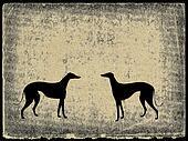 illustration greyhound on grunge background