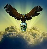 Bald Eagle with Skull