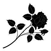 Flower rose black silhouette