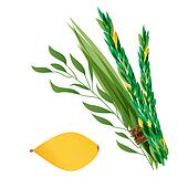illustration of four species - palm, willow, myrtle , lemon - symbols of Jewish holiday Sukkot.