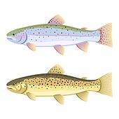 Rainbow and brown trout