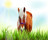 Horse on field of grass