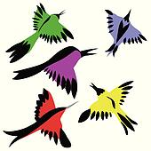 drawing of the decorative birds on white background