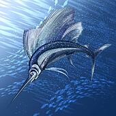 Hunting sailfish
