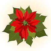 Poinsettia flowers for christmas