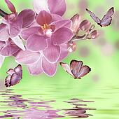 floral background with orchid and butterflies