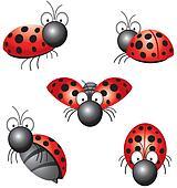 funny ladybird
