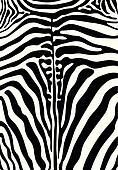 Vector - Zebra print