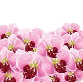 orchid flowers greeting card background