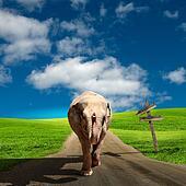 Elephant walking along the road
