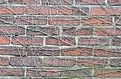 brick wall tree root